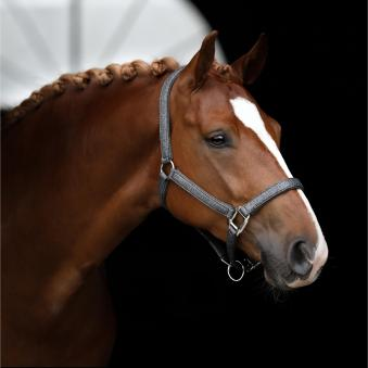 SD Design Halfter Hollywood Glam Warmblut | anthracite